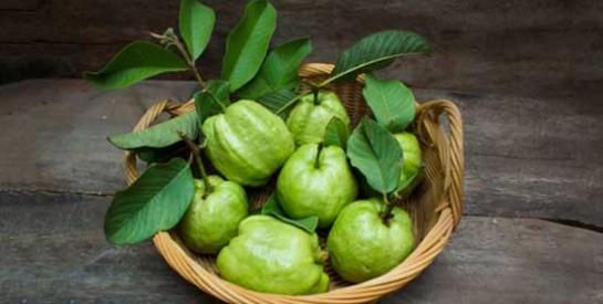 Thé de feuilles de goyave pour éliminer les pertes blanches