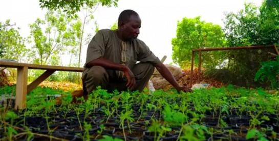 Au Burkina Faso, une ferme agroécologique veut réinventer « le monde d'après »