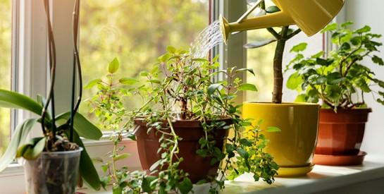 Vos plantes vont survivre grâce a un œuf