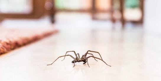 3 astuces géniales de grand-mère pour se débarrasser des araignées