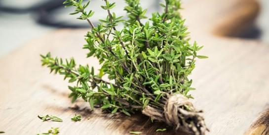 Le thym: une plante miracle pour soigner les infections respiratoires