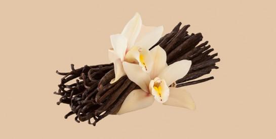 La vanille: cette odeur qui excite les hommes