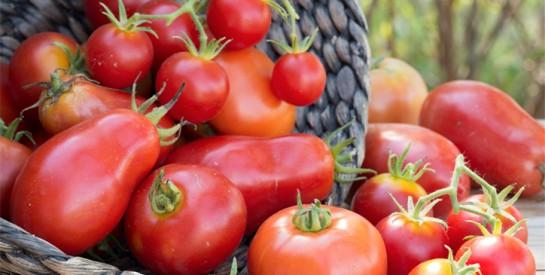 Pourquoi il vaut mieux manger les tomates cuites que crues