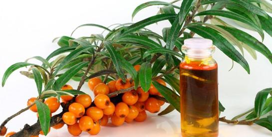 L'huile d'argousier : un adjuvant à la restructuration de l'épiderme