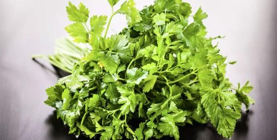 Le cerfeuil, une herbe aromatique aux nombreux bienfaits pour la santé