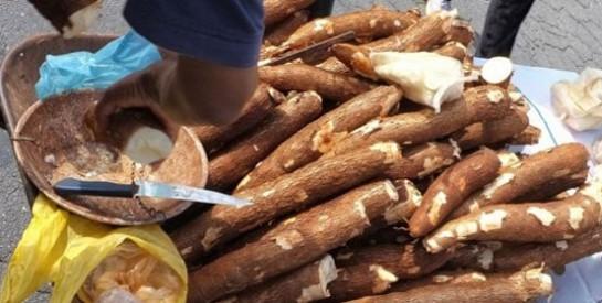 Les caractéristiques nutritionnelles du manioc
